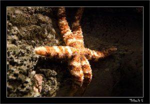 Aquarium Paris - 2 Juin 2011
